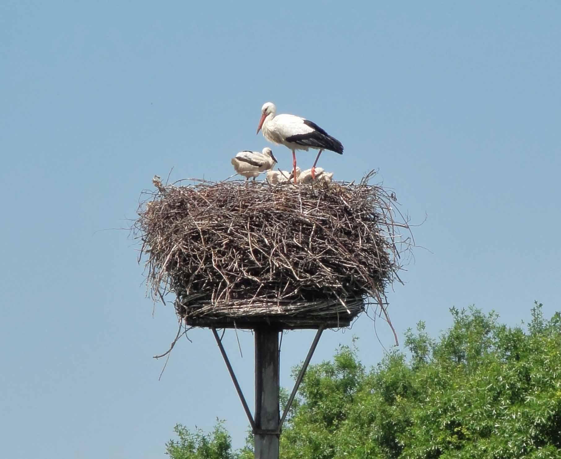 8 Erfgoeddag ooievaars nest 2018